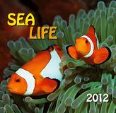 Sea life - nástěnný kalendář 2012