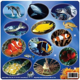 Život v oceánu - Magnetky na ledničku