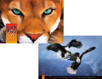 Kalendář 2012 - Wildlife - nástěnný