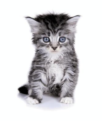 Památníček – koťátko