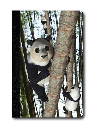 Zápisník - Úžaska - Šplhající pandy