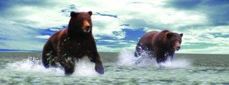 Záložka – Úžaska - Grizly