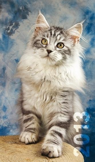 Diář 2013 - Kočky, 9 x 15 cm