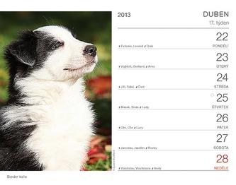 Kalendář 2013 stolní - Psi se jmény psů Praktik, 16,5 x 13 cm