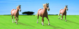 Záložka - Úžaska - Koně