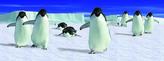 Záložka - Úžaska - Tučňáci