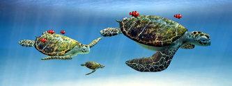 Záložka - Úžaska - Želvy
