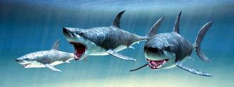 Záložka - Úžaska - Žraloci