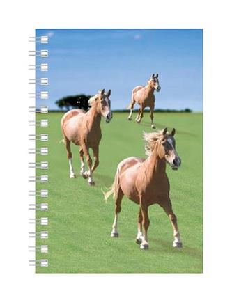 Deníček - Úžaska - Koně
