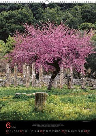 Kalendář 2014 - Stromy Praktik - nástěnný s prodlouženými zády