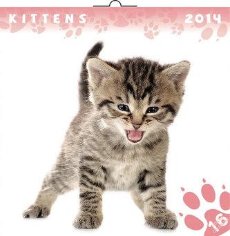 Kalendář 2014 - Koťata - nástěnný poznámkový (ANG, NĚM, FRA, ITA, ŠPA, HOL)