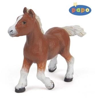Shetlandský kůň
