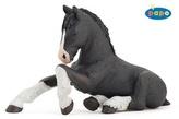 Shirský kůň černý hříbě