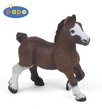 Pony shetlandský hříbě