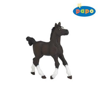 Arabský kůň mládě