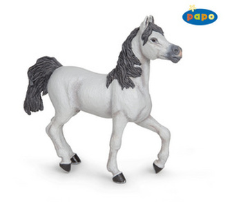 Kůň arabský bílý