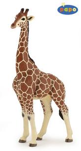 Žirafa samec