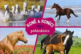 Koně - Pohlednice