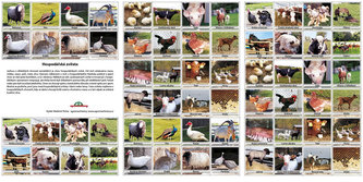 Hospodářská zvířata - pexeso - neuveden