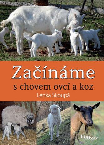 Začínáme schovem ovcí a koz