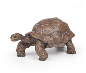 Želva Galapážská