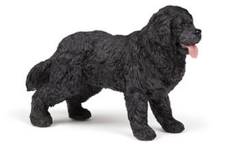 Nowofundladský Terrier