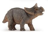 Triceratops mládě