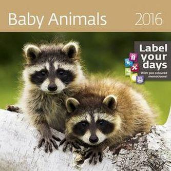 Kalendář nástěnný 2016 - Baby Animals