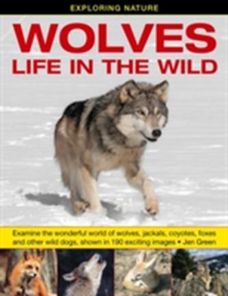 Exploring Nature: Wolves - Life in the Wild - Jennifer Greene, Andrew Stellman