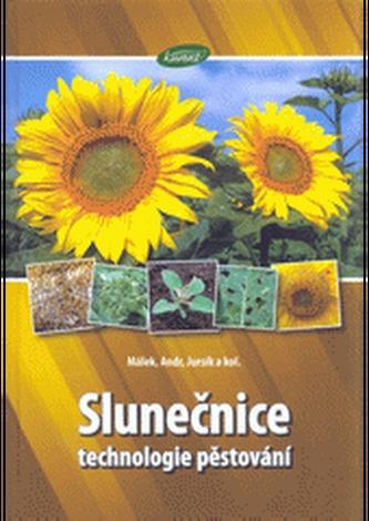 Slunečnice - technologie pěstování