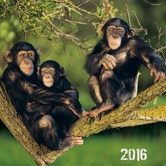 Opice 2016 - nástěnný kalendář