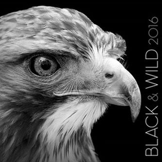 Black & Wild 2016 - nástěnný kalendář