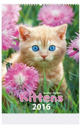 Kittens - nástenný kalendář 2016