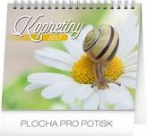 Kalendář stolní 2017 - Kopretiny s citáty