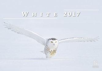 Kalendář nástěnný 2017 - White/Exclusive