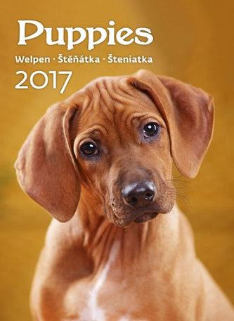 Kalendář nástěnný 2017 - Štěňátka