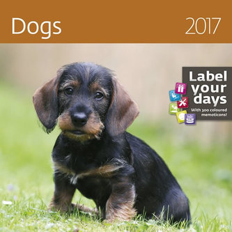 Kalendář nástěnný 2017 - Dogs