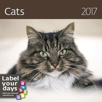 Kalendář nástěnný 2017 - Cats 300x300cm