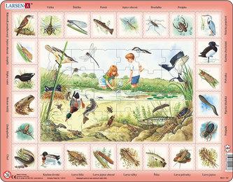 Puzzle MAXI - Život u rybníka/48 dílků - neuveden