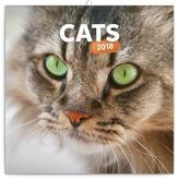 Kočky - nástěnný kalendář 2018