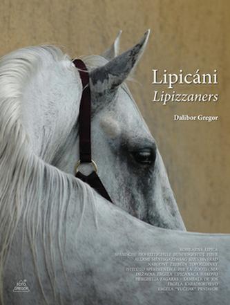 Lipicáni  Lipizzaners