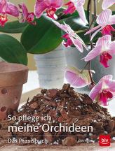 So pflege ich meine Orchideen