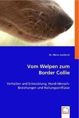 Vom Welpen zum Border Collie