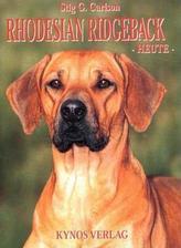 Rhodesian Ridgeback heute