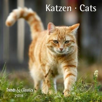Katzen / Cats 2018