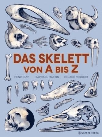 Das Skelett von A bis Z