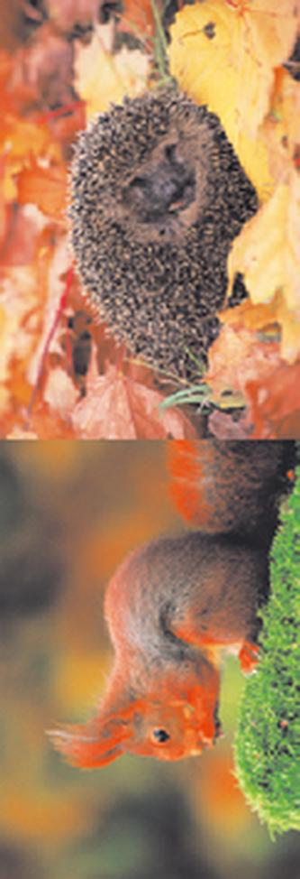 MZ 887 Veverka a ježek