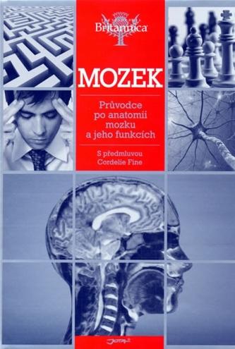 Mozek - Průvodce po anatomii mozku a jeh