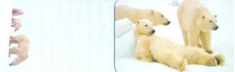 MZ 2963 Lední medvědi
