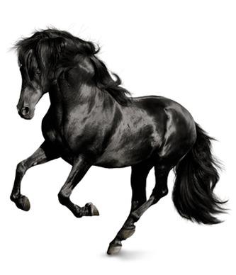 Památníček - kůň